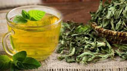 Melisa çayının faydaları nelerdir? Melisa çayı ne işe yarar? Melisa Çayı her gün içilir mi?
