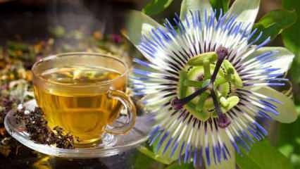 Passiflora çayı faydaları nelerdir? Passiflora ne işe yarar?