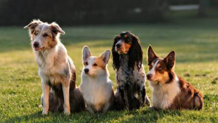 Rüyada köpek sevmek neye işaret? Rüyada köpekten kaçmak ne anlama gelir?