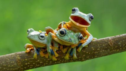 Rüyada kurbağadan korkmak ne anlama gelir? Rüyada evde kurbağa görmek neye işaret eder?