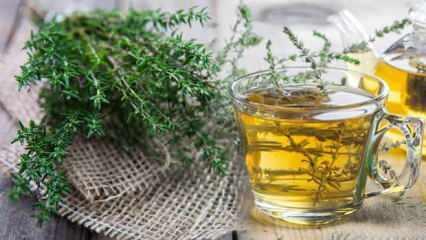 Kekik çayı faydaları nelerdir? Kekik çayı tansiyonu düşürür mü? Kekik çayı nasıl hazırlanır?