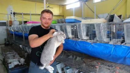 Adana'da öğretmenliği bıraktı, tavşan çiftliği kurdu!
