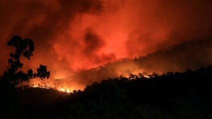 Son dakika haberi: Orman yangınlarıyla mücadelenin seyrini değiştirecek yazılım!