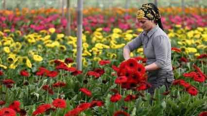 Türkiye'nin tarım ihracatı 2 milyar doların altına düşmedi