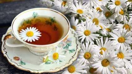 Hamilelikte papatya çayı içilir mi? Papatya çayının faydaları nelerdir?