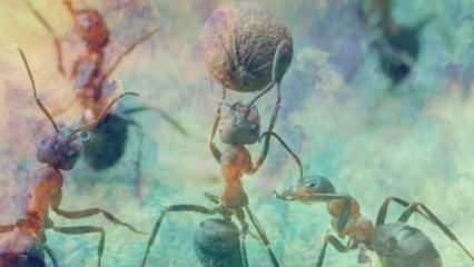 Rüyada karınca görmek ne demek? Rüyada karınca yemek hayırlı mıdır?