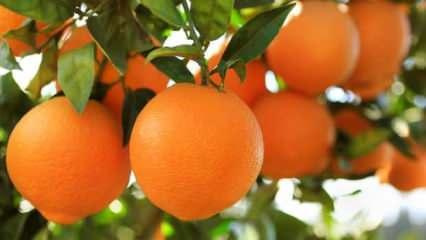 Rüyada portakal görmek ne demek? Rüyada portakal soymak hayırlı mıdır?