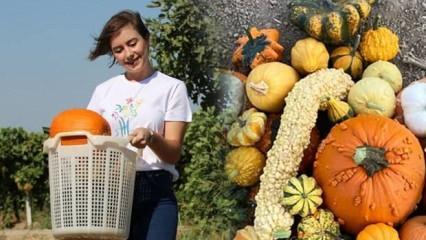 Genç girişimci Öznur Gülden ata mesleği çiftçiliğe döndü! Minyatür kabak üretiyor