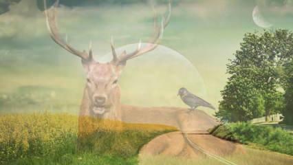 Rüyada geyik boynuzu neye işaret eder? Rüyada geyik avlamak ne anlama gelir?