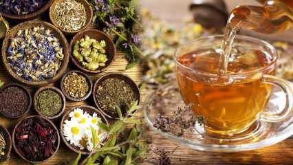 Sonbaharda tüketebileceğiniz 5 şifalı çay! Gribe kalkan oluyor