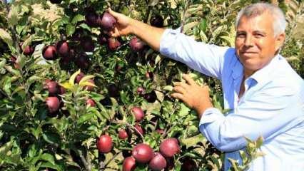 Burada yetişmez dediler! Kimseyi dinlemedi, bir ağaçtan 100 kilo meyve topluyor