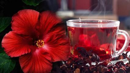 Hibiskus çayı faydaları ve nelerdir? Hibiskus çayı nasıl kullanılır?