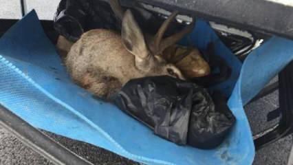 İki avcıya ceza yağacak! Kaza yaptıkları araçtan 2 geyik çıktı