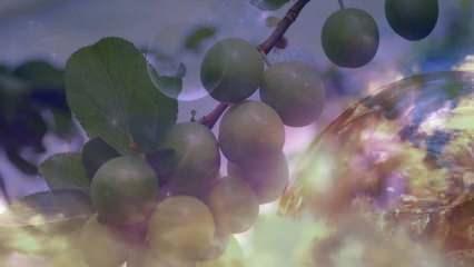Rüyada erik yemek ne demek? Rüyada ağaçtan erik toplamak neye işaret eder?