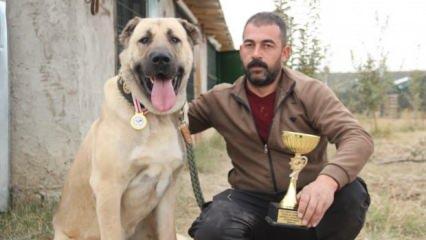 350 rakibini geride bıraktı! İşte Türkiye'nin en iyi Anadolu Çoban Köpeği