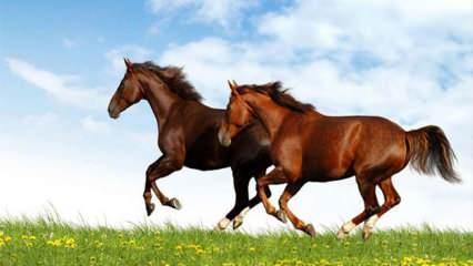 Rüyada at görmek ne anlama gelir? Diyanet'e göre rüyada ata binmenin anlamı