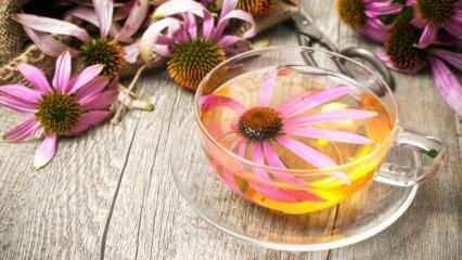 Ekinezya çayı mucizesi! Mikropları kırıyor, bağışıklığı güçlendiriyor...
