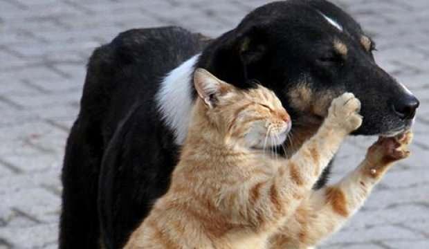 Hayvan Hakları Yasası çıkıyor! AK Parti'den son dakika ...