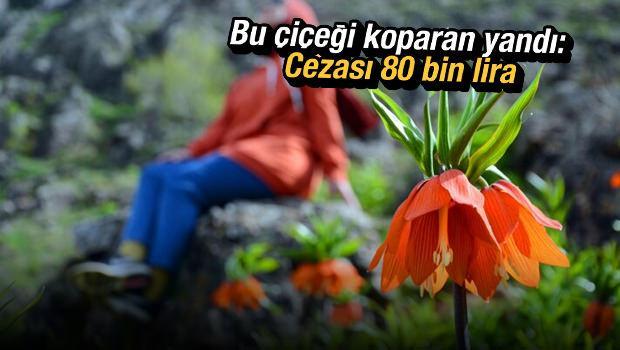 Bu çiçeği koparan yandı: Cezası 80 bin lira
